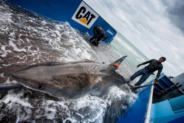 Ocearch photo of Lydia