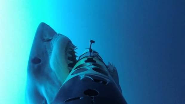 remus shark cam